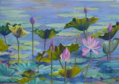 Lotuses at Fogg Dam