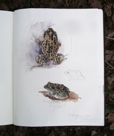 Page from a nature notebook